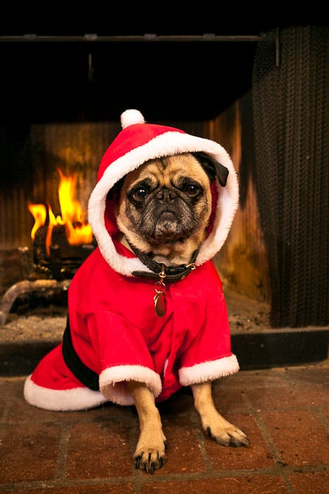 Useful Photography Tip #10: Holiday Pet Photos