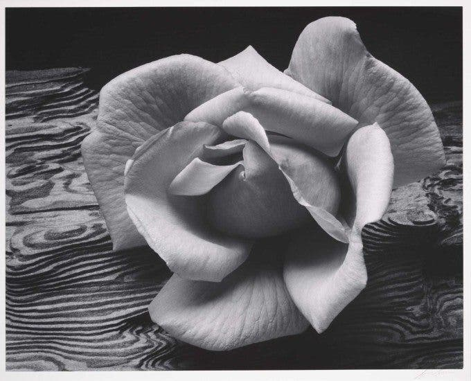 Rose and Driftwood - 1932