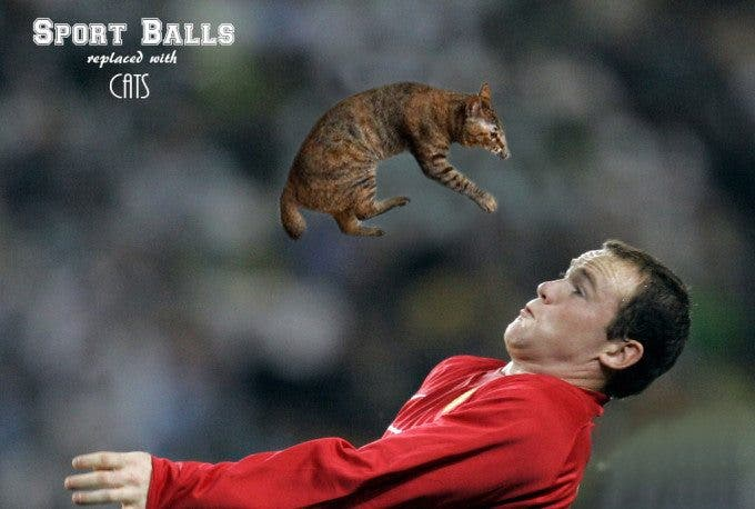 Hysterical New Photo Meme Involves Athletes Using Cats Instead of Balls - The Phoblographer
