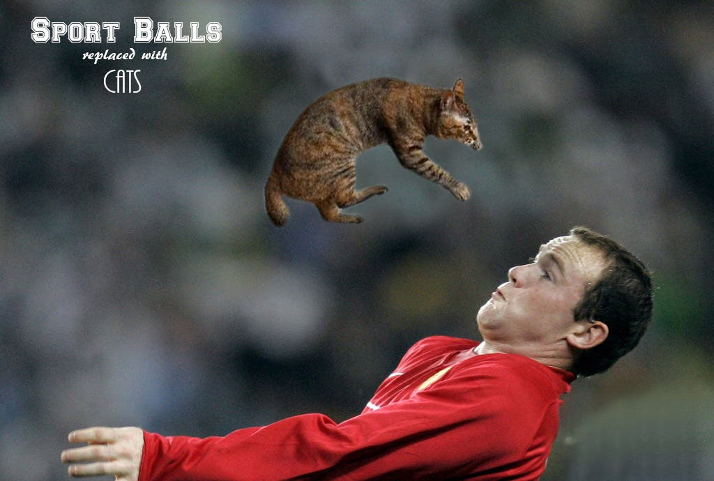 Hysterical New Photo Meme Involves Athletes Using Cats Instead of Balls