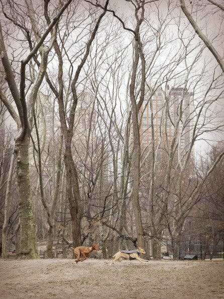 Chasing Dogs, Central Park-NY_0028