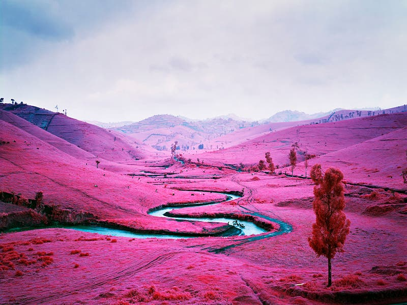 Richard Mosse: The Impossible Image Is A Film Shot on Infrared 16mm Film