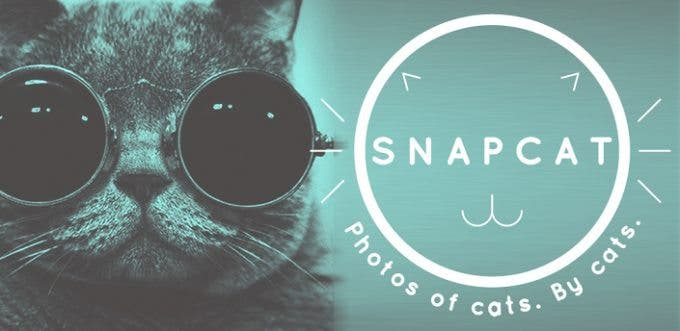 Snapcat is an App That Lets Your Cat Take Selfies