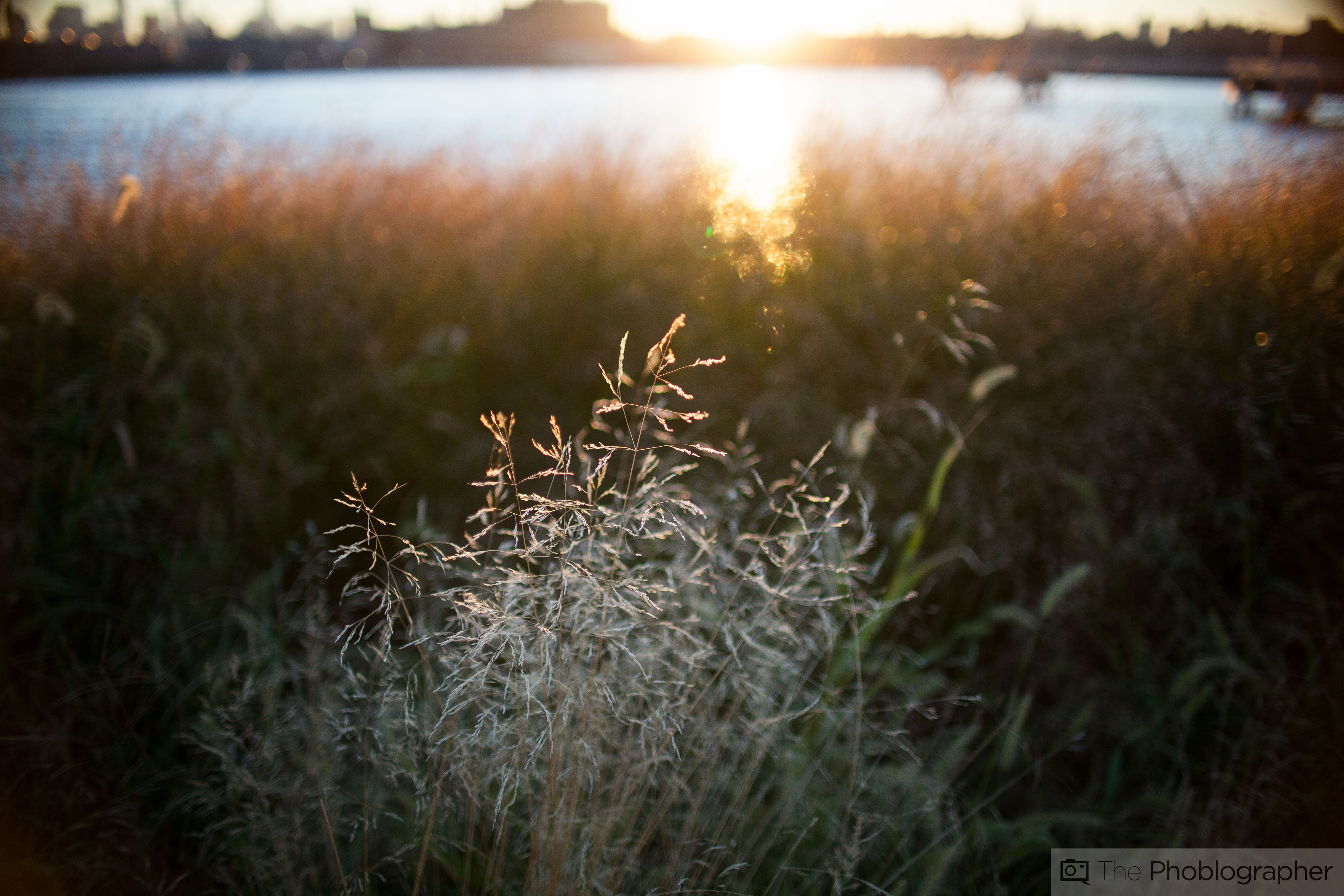 Review Sigma 30mm F1 4 Ii Canon Ef The Phoblographer