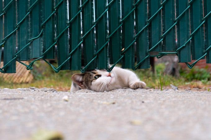 On Photographing Cats - The Phoblographer