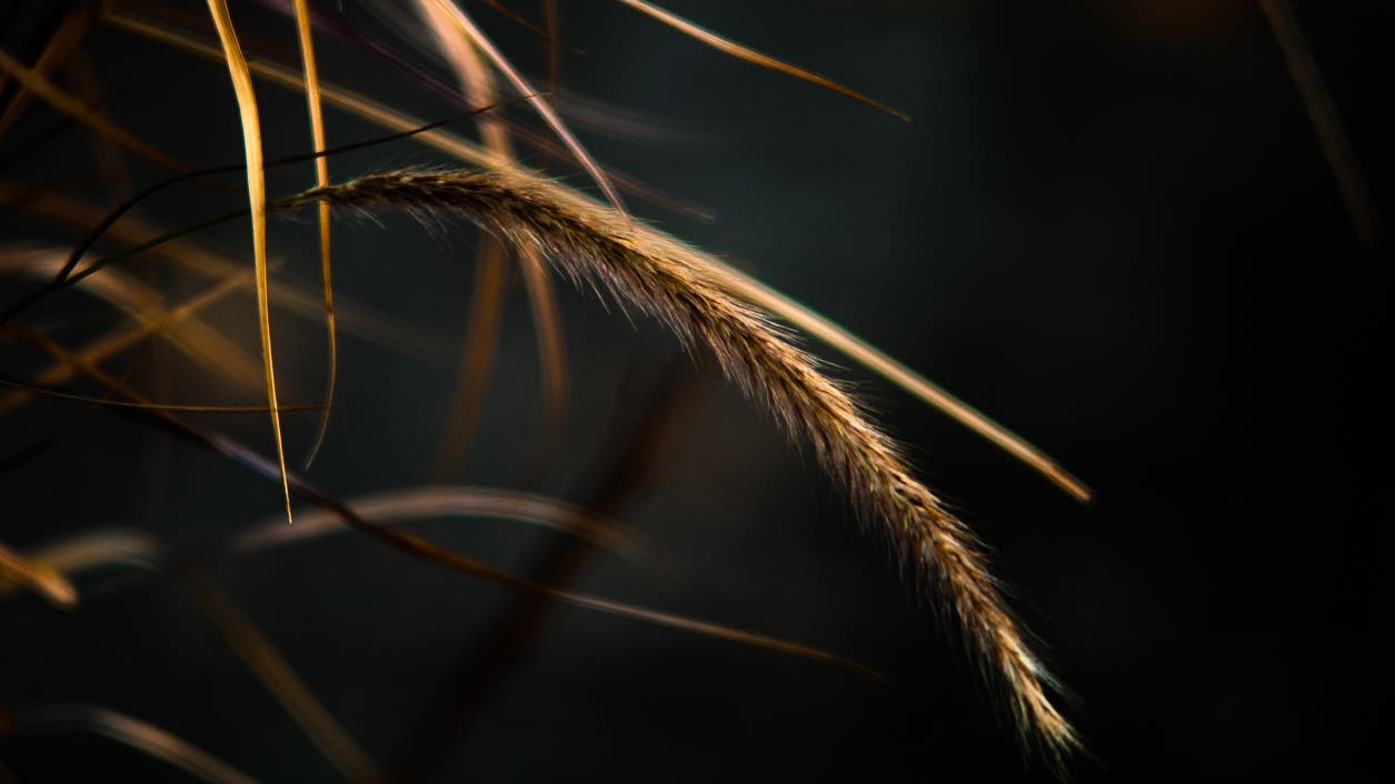 Useful Photography Tip #75: Bend Like a Reed In The Wind