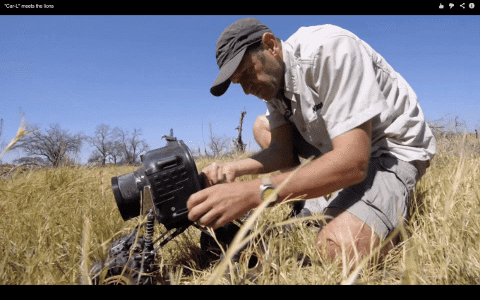 Nikon D800E Gets Attacked by Pride of Lions