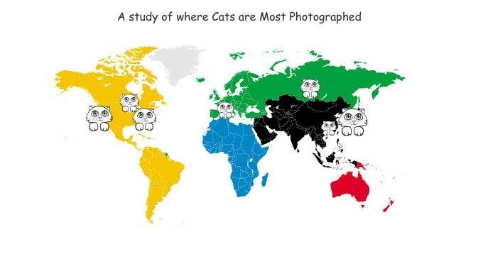 CAT-photography-study