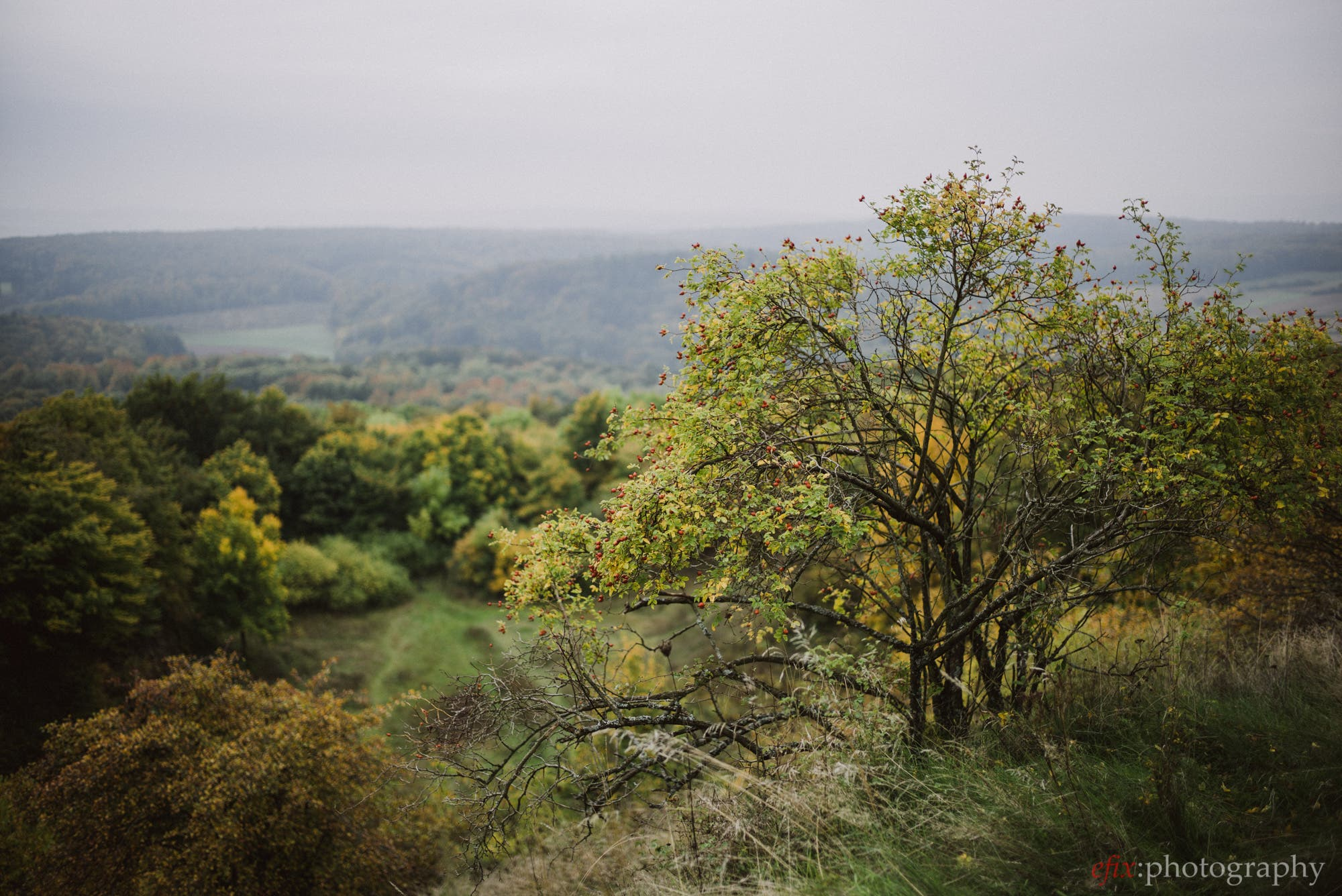 Review: Really Nice Images Film Presets for Lightroom - The