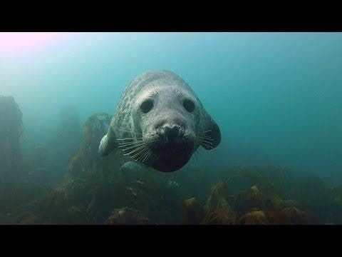 There's Plenty of Blubber Love in this New GoPro Video as Diver Gives Seals Belly Rubs