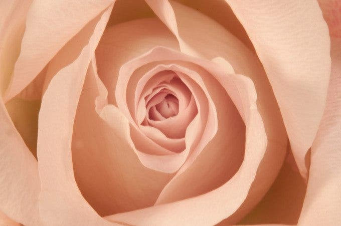 4324 - white pink rose at 6 seconds_retouched
