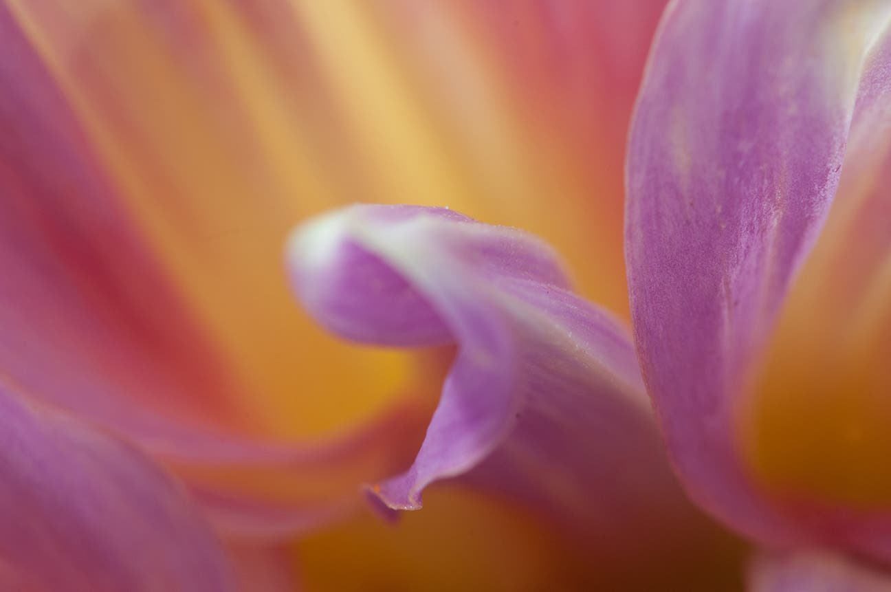 5 Tricks for Shooting the Best Flower Photos + Special Photography Class Giveaway