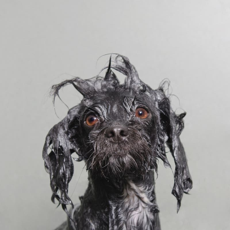 This Quirky Dog Portrait Series Takes Bath Time to a Whole New Level