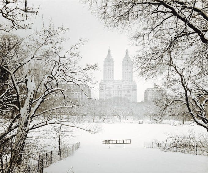 Central Park Winter - San Remo Through Trees - New York City