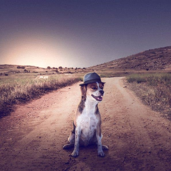 Using Photography in an Effort To Get Dogs Adopted