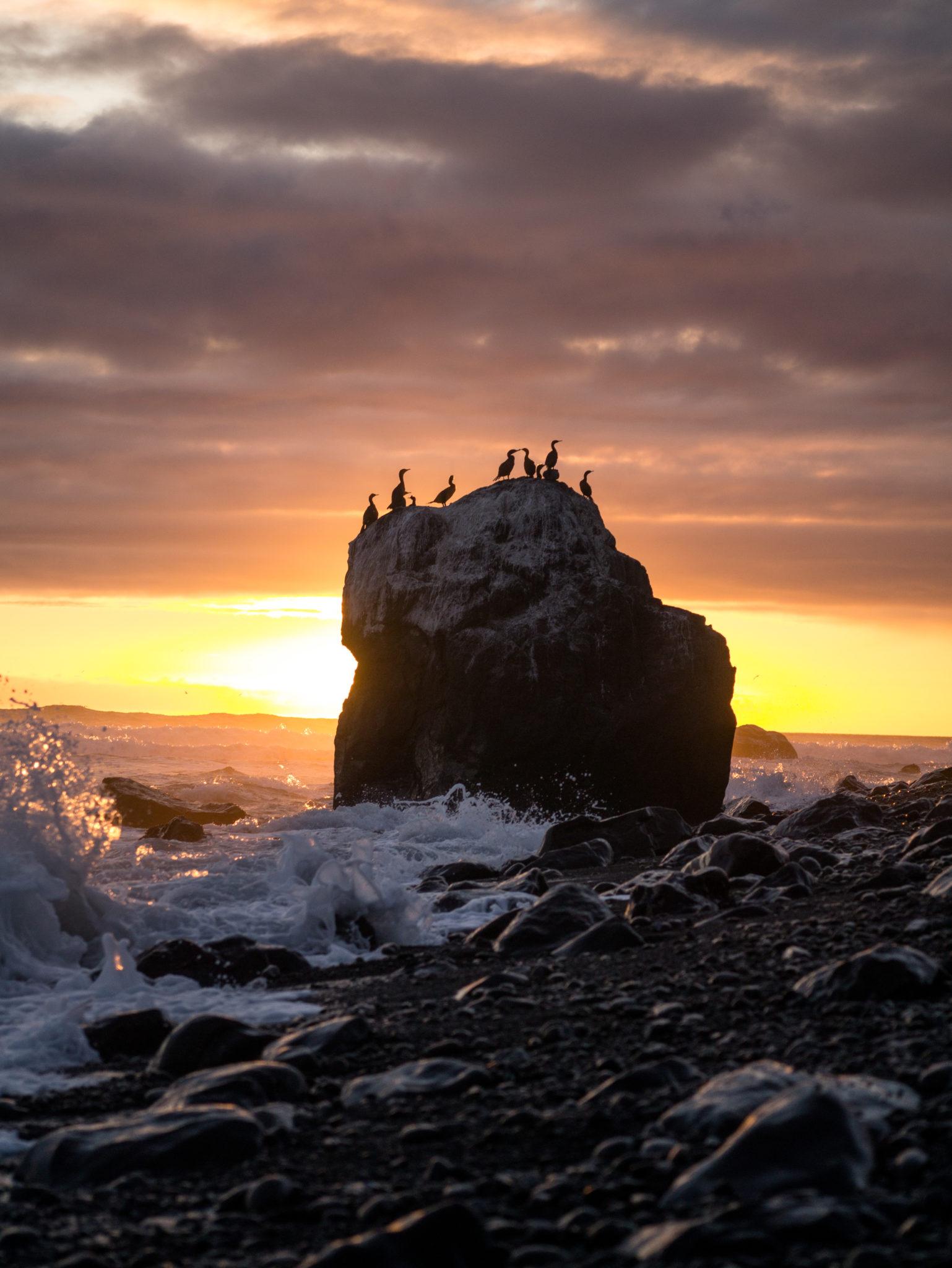 Egret Rock