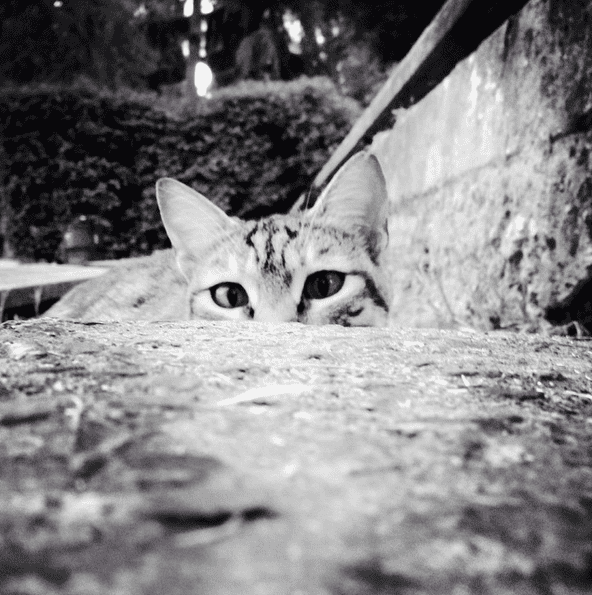 julius motal the phoblographer cats 04