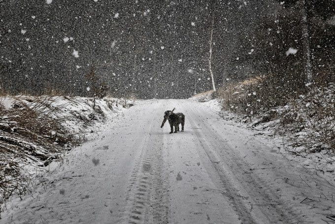 DOGSCAPES-MARX-01
