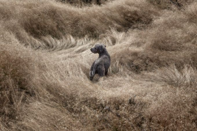 DOGSCAPES-MARX-07