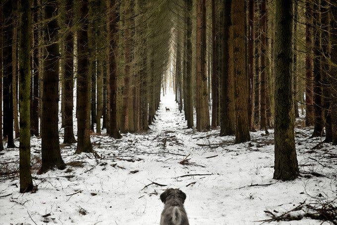 DOGSCAPES-MARX-14