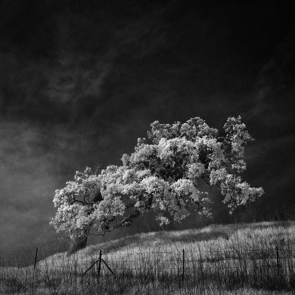 Slices of silence quiet black and white infrared landscapes