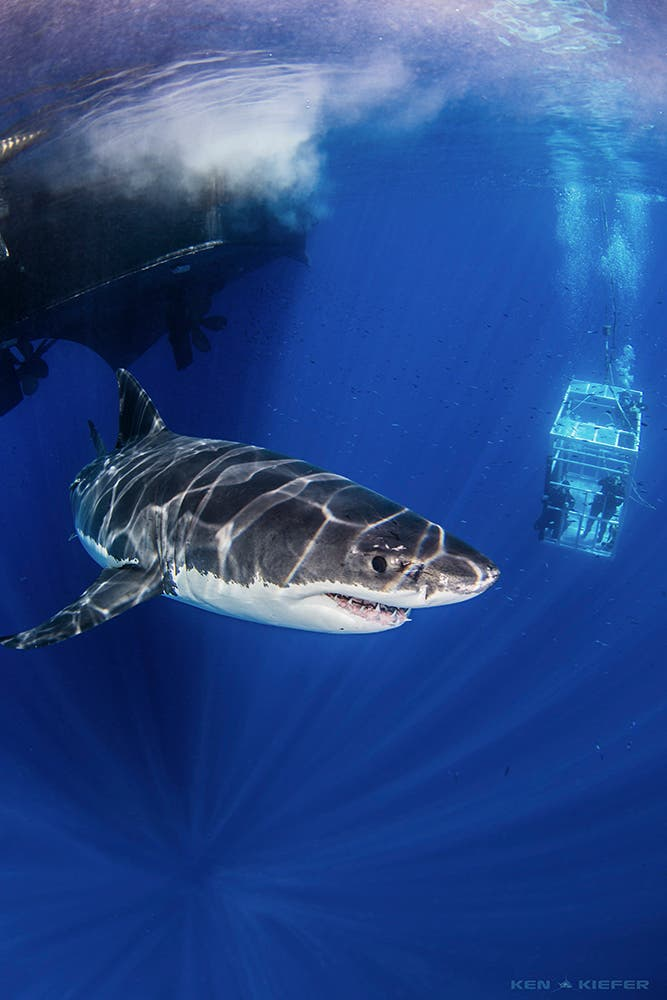 Ken Kiefer On Photographing Big Scary Creatures Underwater