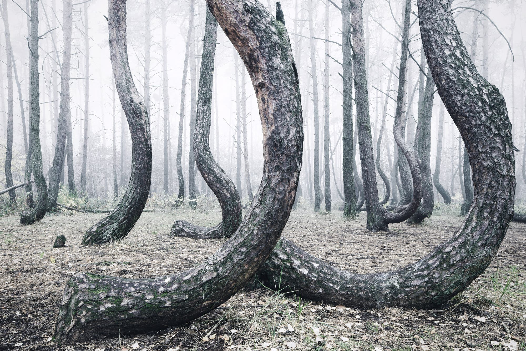 Crooked Forest - Kilian Schînberger (3)