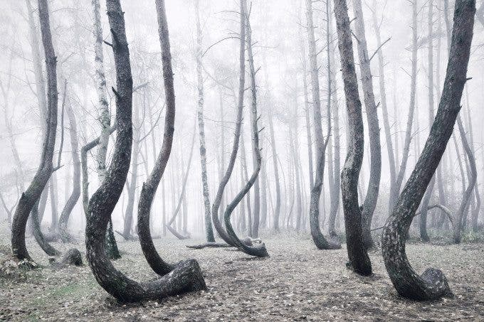 Kilian Schoenberger's Photos of Europe's Crooked Forest