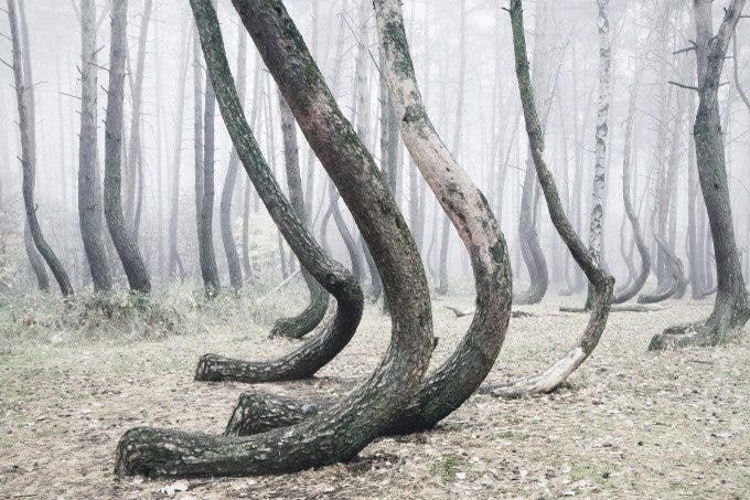 Crooked Forest - Kilian Schînberger (5)