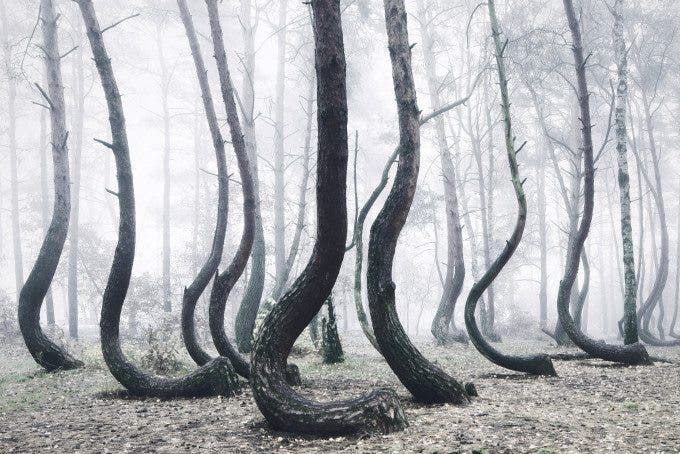 Crooked Forest - Kilian Schînberger (6)