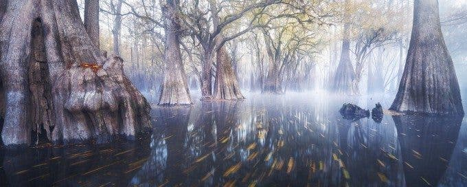 Paul Marcellini - Dagobah - 3rd place in FINE ART LANDSCAPE