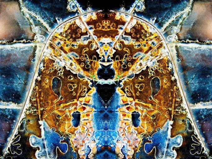 Pete McCutchen - Fractalizations - 3rd place in FINE ART ABSTRACT - 5