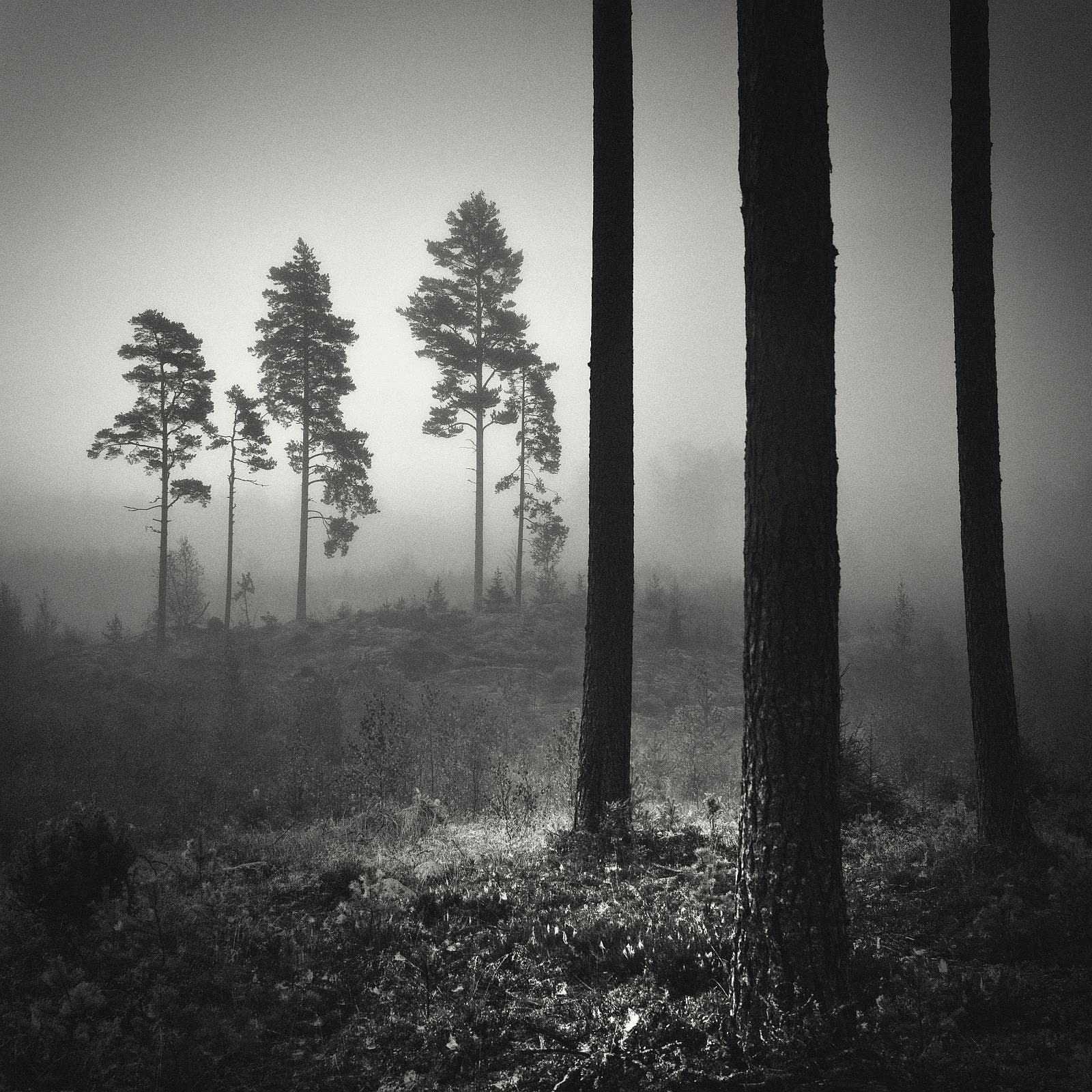 Scene over a deforested foggy hill at dawn