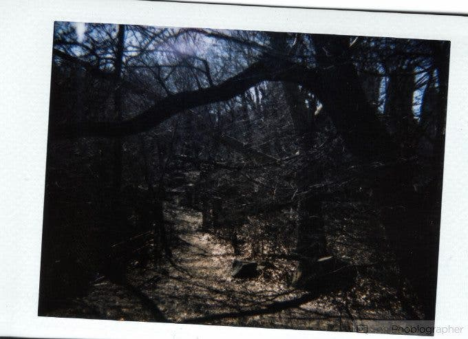 Chris Gampat The Phoblographer Diana F+ review sample in Central Park woods (1 of 1)