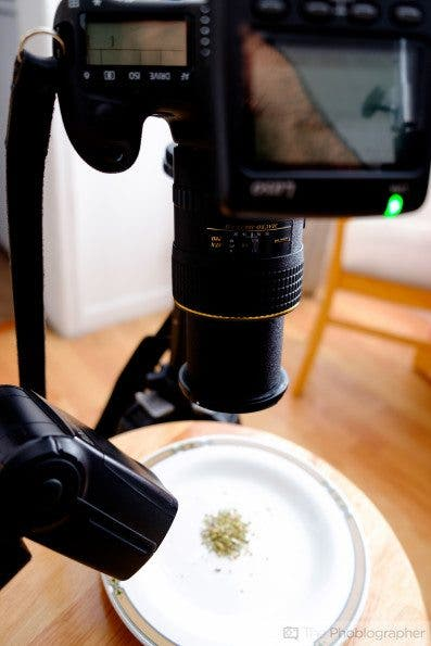 Useful Photography Tip #151: Direct Flash and Macro Photography