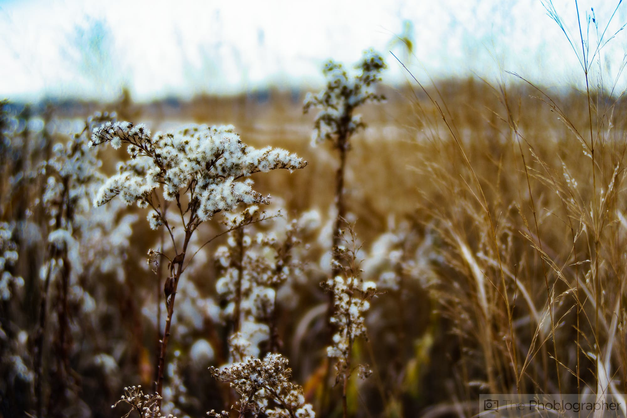 The Lost Art of Freelensing. How to Get the Tilt-Shift Look in a Crafty Way