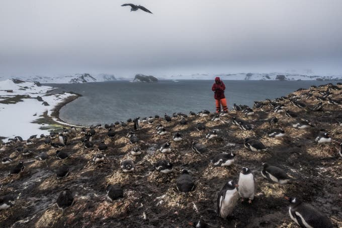 6. ANTARCTICA - DECEMBER 07, 2015: A Member of a German research team from the Friedrich Schiller University Jena, counts the number of penguin species and pairs as part of ongoing research on bird and penguin species in Antarctica, on 7th of December, 2015 on Ardley Island in the Fildes Peninsula on King George Island, Antarctica. Yardley Island has been designated an Antarctic Specially Protected Area (ASPA 150) because of the importance of its seabird and penguin colonies. More than a century has passed since explorers raced to plant their flags at the bottom of the world. But today, an array of countries are rushing to assert greater influence in Antarctica. Russia built the continent's first Orthodox church, pictured here, on a glacier-filled island with fjords and elephant seals. Less than an hour away by snowmobile, Chinese labourers have updated the Great Wall Station, a linchpin in China's plan to operate 5 bases on Antarctica. And India's futuristic new Bharathi base resembles a spaceship. The continent is supposed to be protected as a scientific preserve for decades to come, but many are looking toward the day those protective treaties expire — and exploring the strategic and commercial opportunities that exist right now.