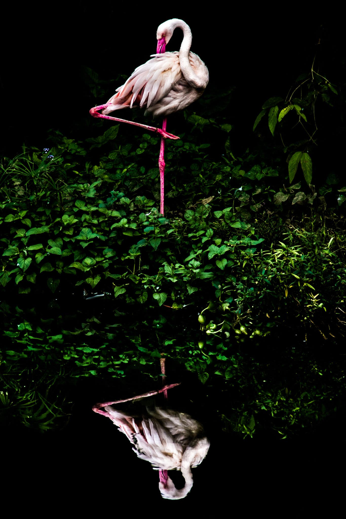 Image Description: I've used water reflection let the grass looks like a cloud. So I named It Cloud Flamingo. Copyright:  Steiner Wang, Taiwan, Shortlist, Open Nature and Wildlife, 2016 Sony World Photography Awards