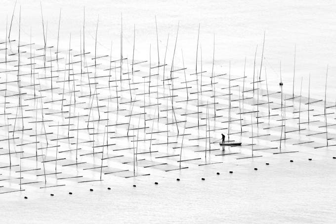A fisherman is farming the sea in between the bamboo rods constructed for aquaculture off the coast in southern China. ©Tugo Cheng, Hong Kong, Shortlist, Open, Travel, 2016 Sony World Photography Awards