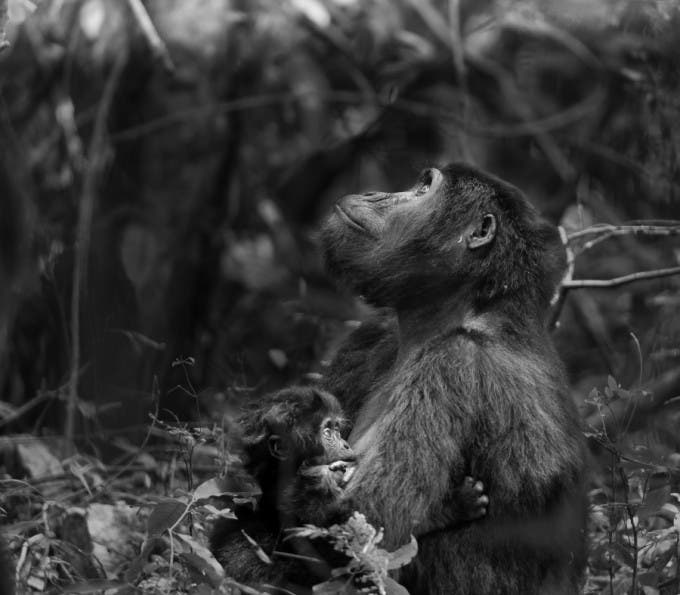 Wildlife_3rd_Place_Winner_Amateur_Dalida_and_Andrew_Innes