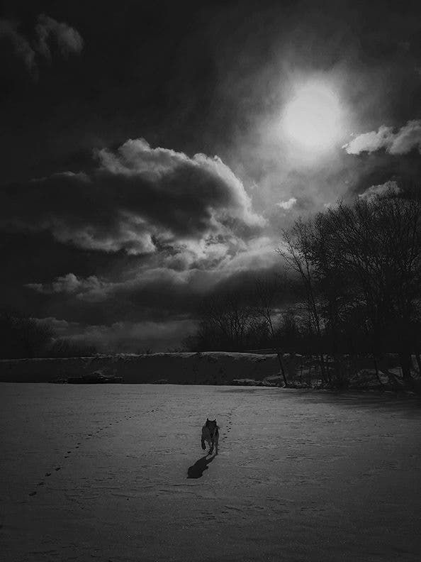 Cheryl Senter: Black and White Photos of Rescue Dogs