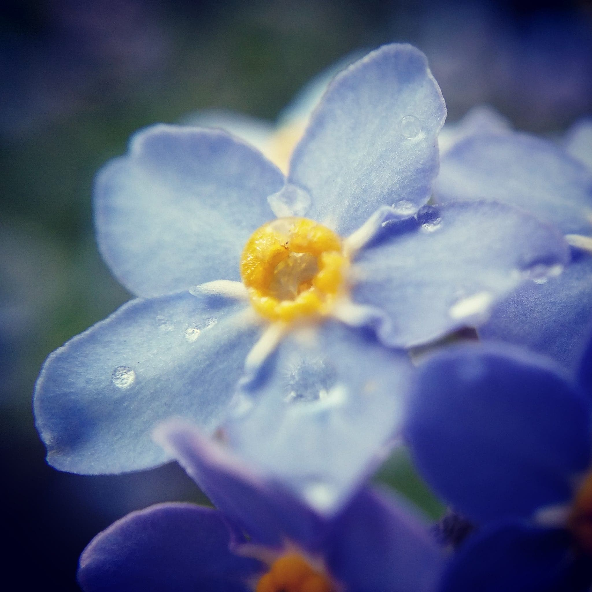 This Macro Photo iPhone Hack Renders Gorgeous Bokeh