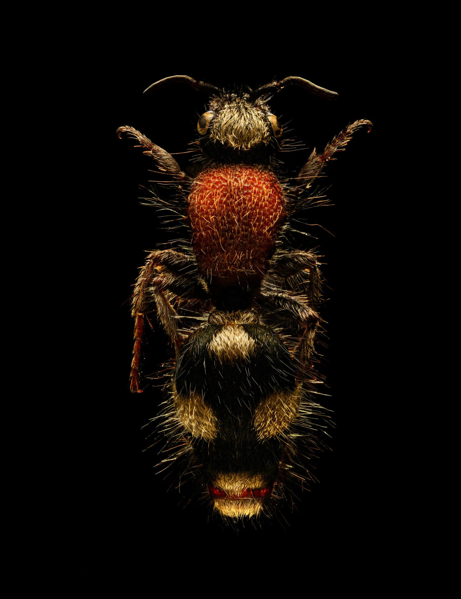 Microsculpture: Insanely Detailed Macro Photos of Bugs