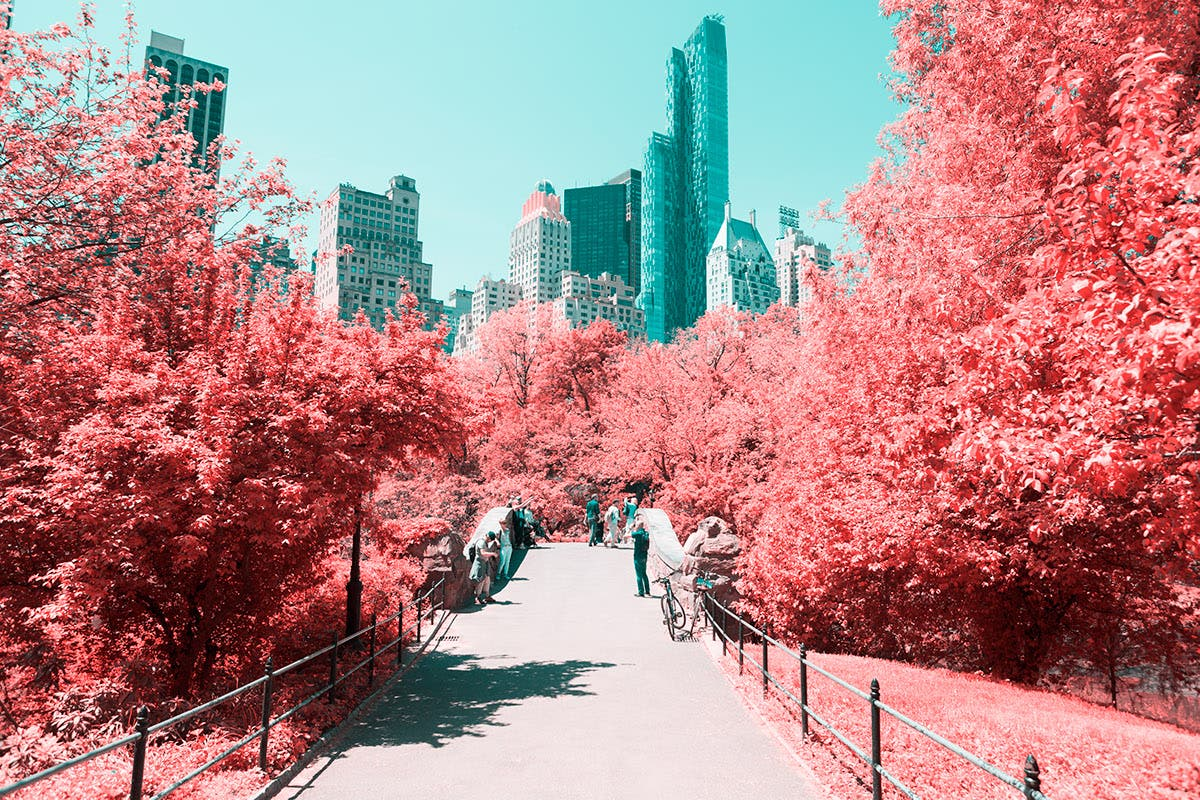 Infrared NYC: Central Park Like You Have Never Seen It Before
