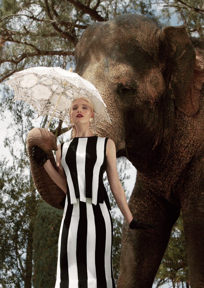 Autumn for the Elephants: Combining Fashion and Conservation