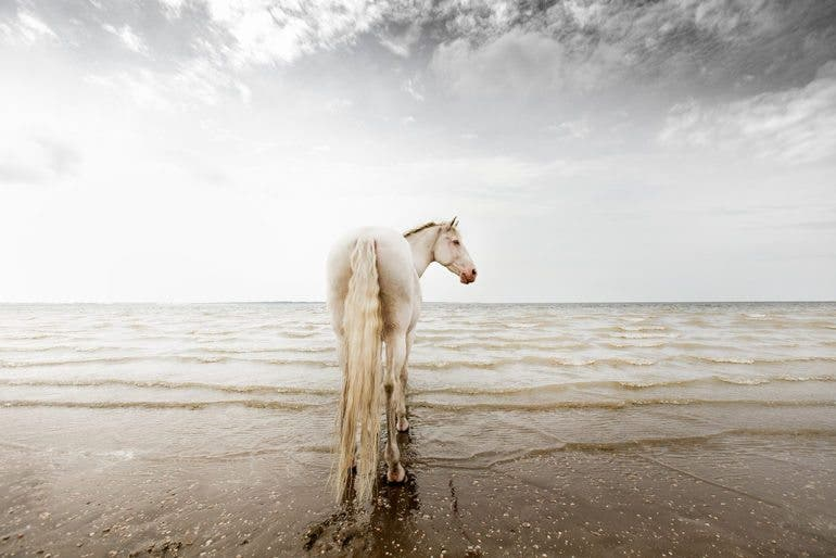 clairedroppert-horse-2
