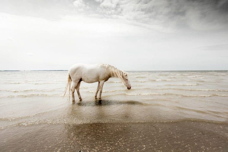clairedroppert-horse-3
