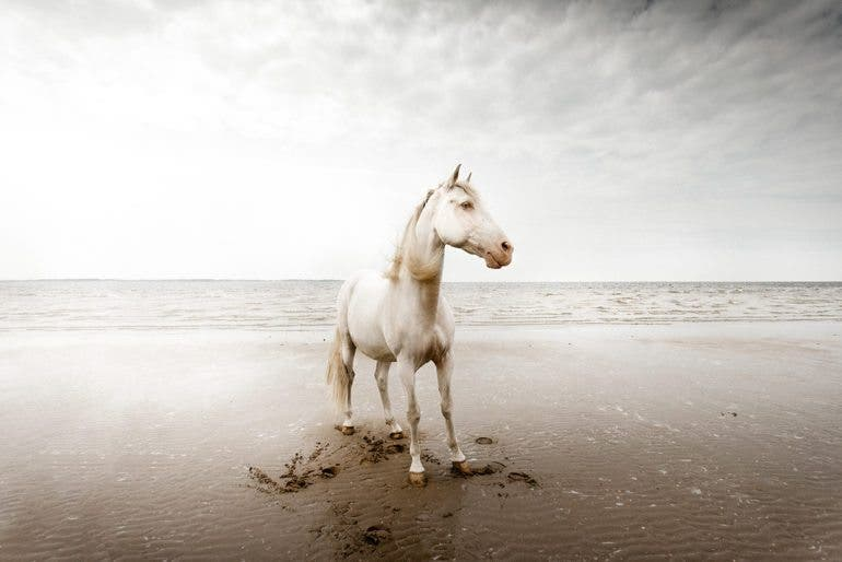 clairedroppert-horse-4