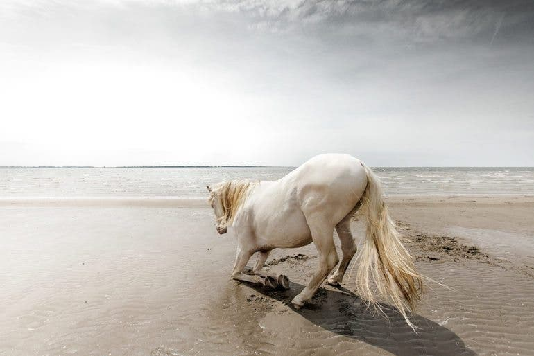 clairedroppert-horse-5