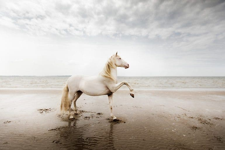 clairedroppert-horse-7